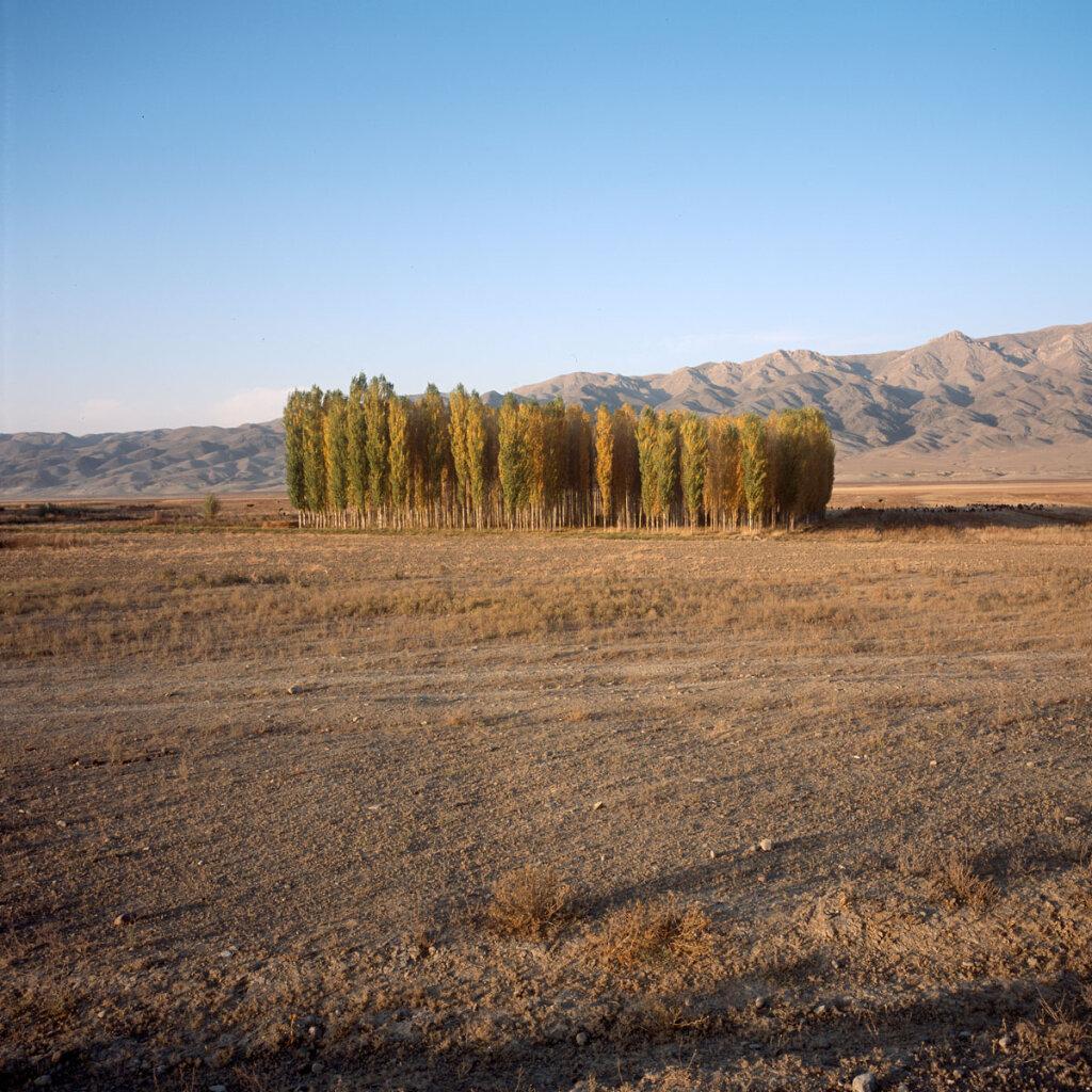 Poplars near Klyuchëvka