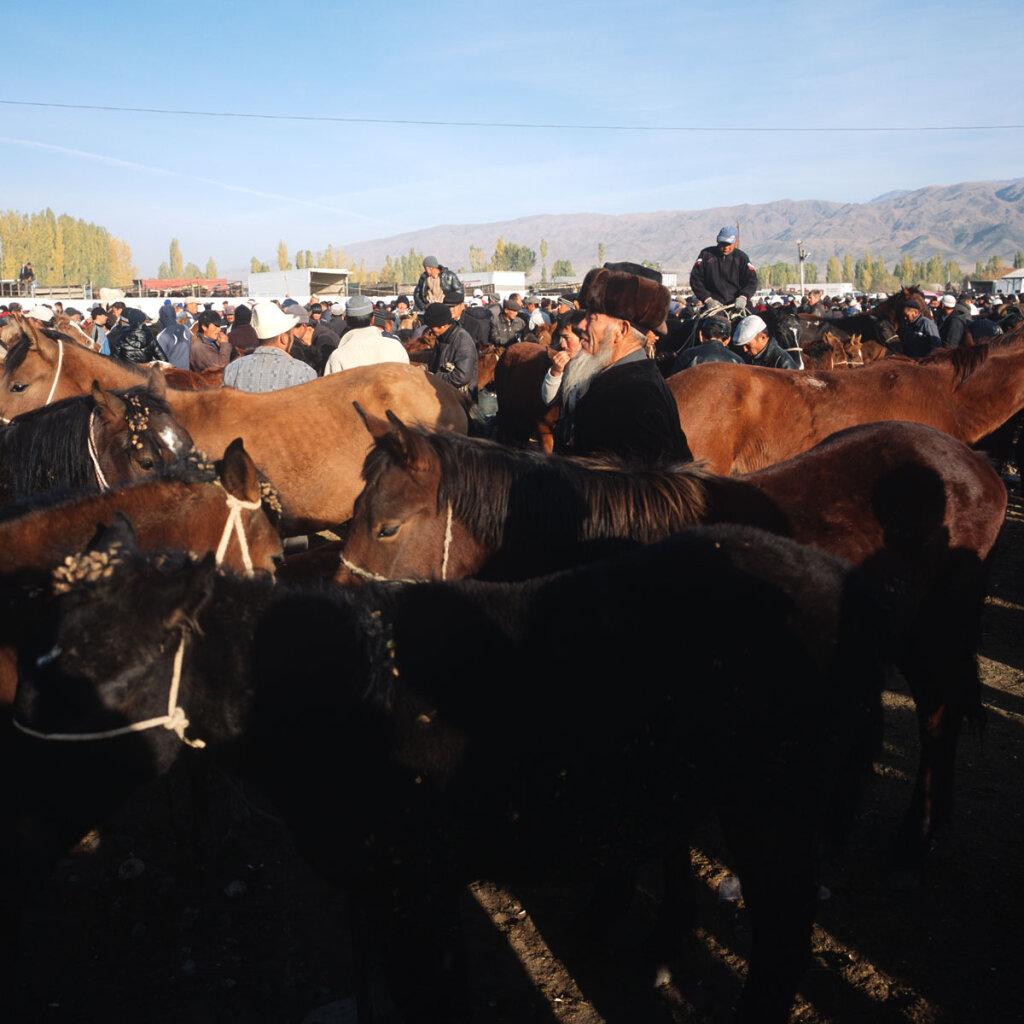 Cattle market in Talas