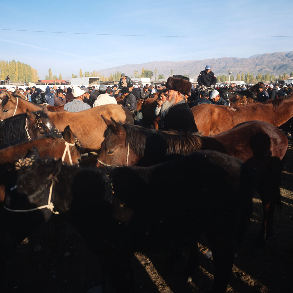Cattle market in Talas